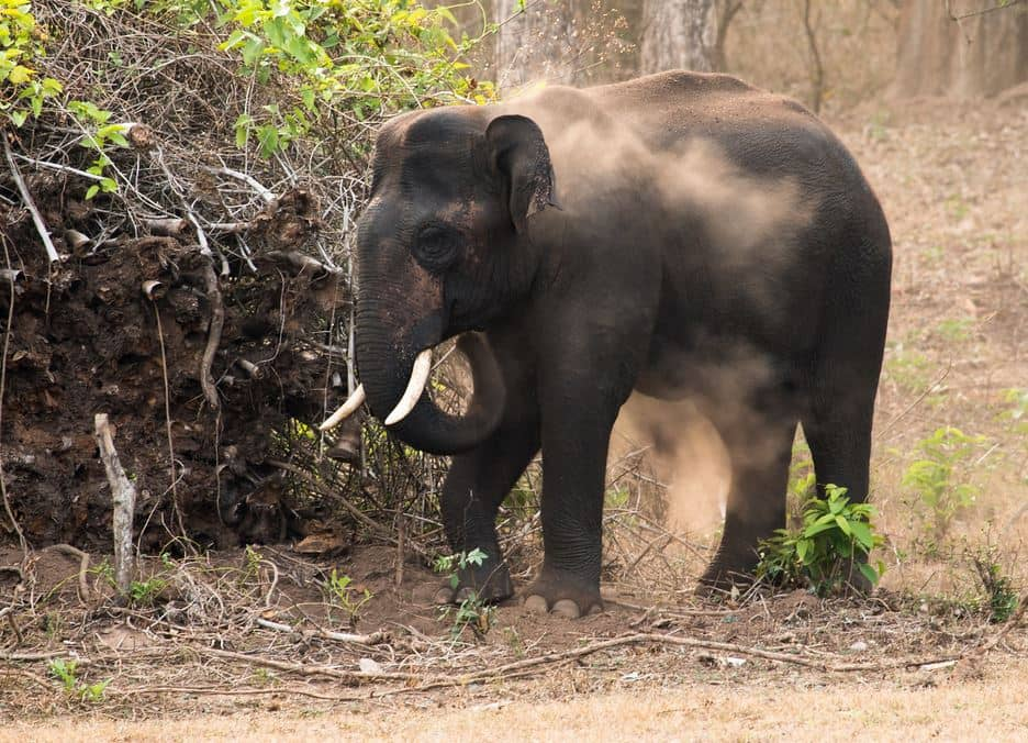 Dubare Elephant Camp – Visiting Timings Coorg