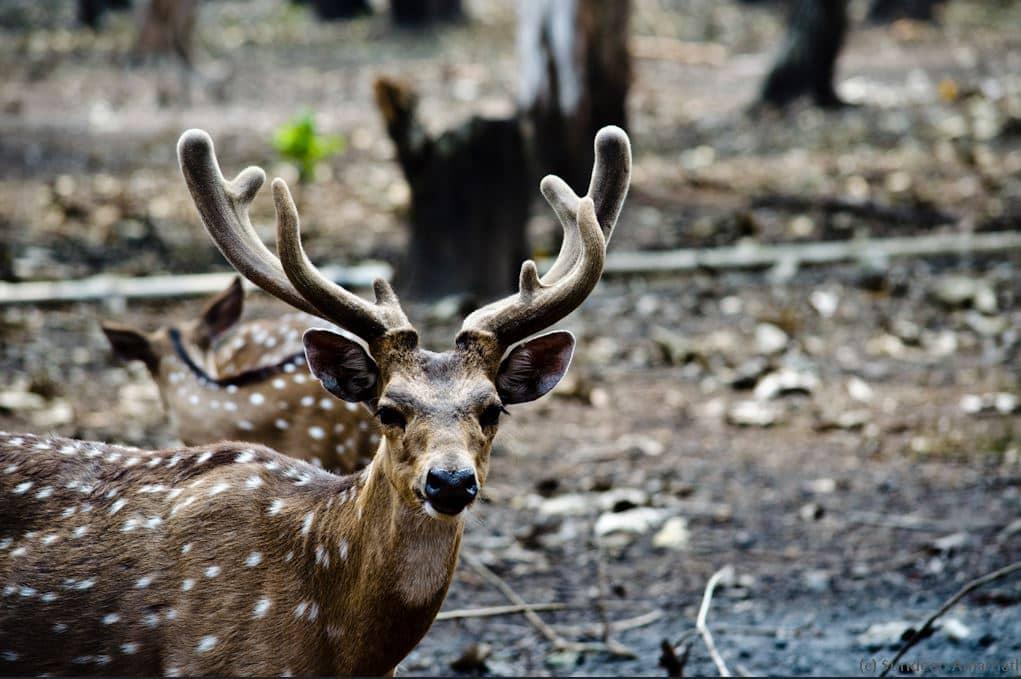 Nisargadhama – Nature park Coorg Visiting Timings